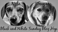 http://dachshundnola.blogspot.com/p/black-and-white-sunday-blog-hop.html