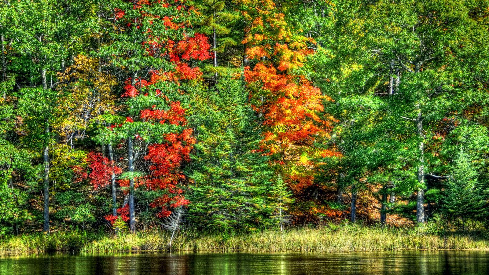 Осень золотая фотообои