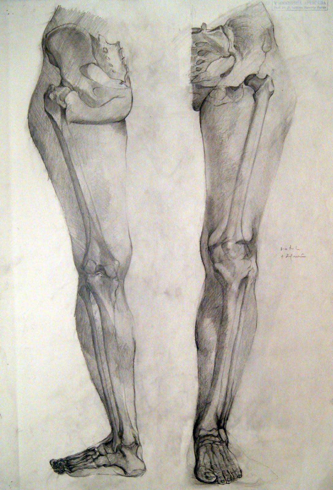 Increíble Dibujos De Anatomía Grises Colección de Imágenes - Dibujos ...