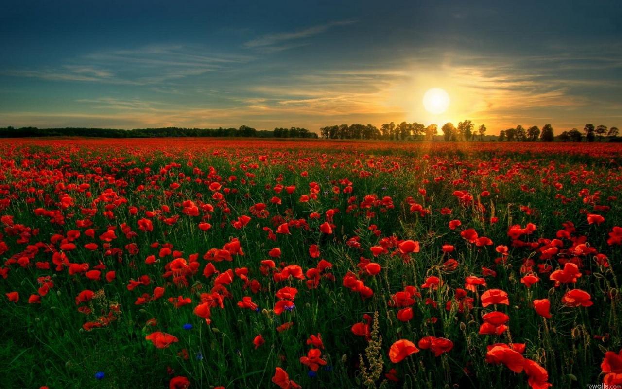 http://1.bp.blogspot.com/-YmzQKFowzD0/TzpgdOml_GI/AAAAAAAABTQ/lKd8idI4uVs/s1600/red_flower_garden-1280x800.jpg
