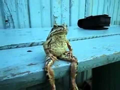frog-sitting-on-a-bench-like-a-human.jpg