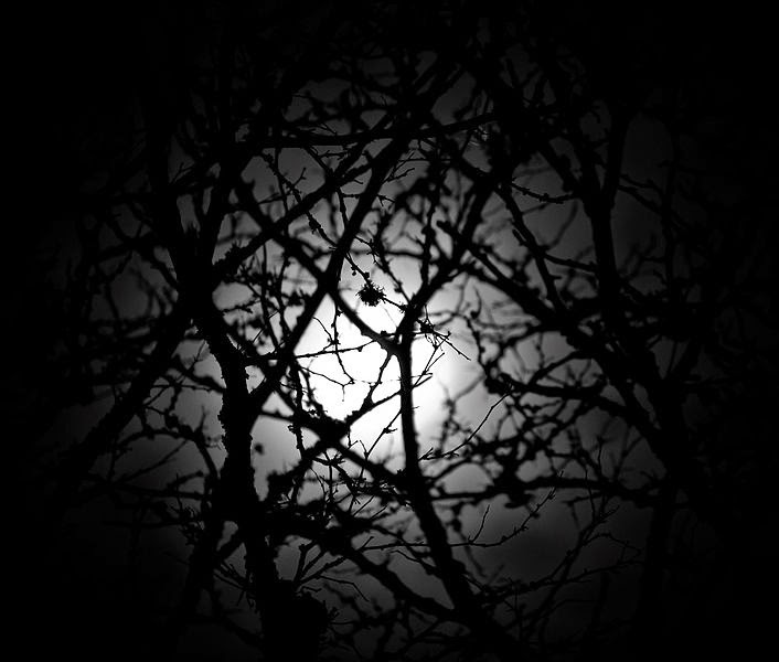 The moon seen through branches,