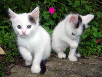 Cute Cats Wallpaper on Funny Wallpapers Hd Wallpapers Cute Cat Wallpaper Desktop