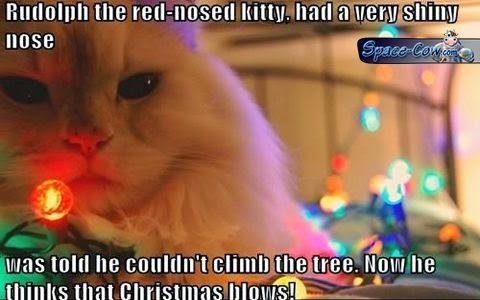 funny animals Rudolph cat