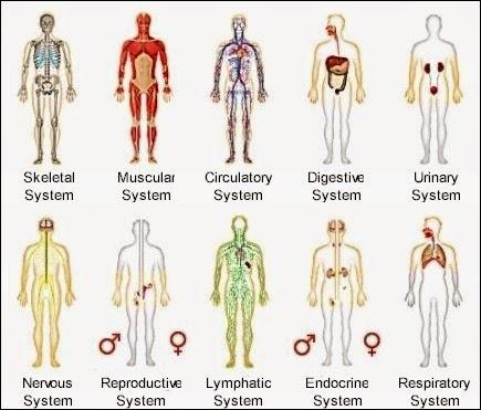 Animal Systems Isa Biology Resource Blog