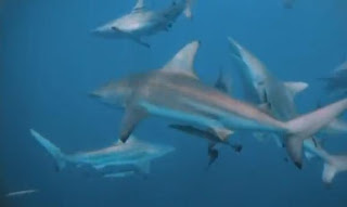 Attaque de requins documentaire