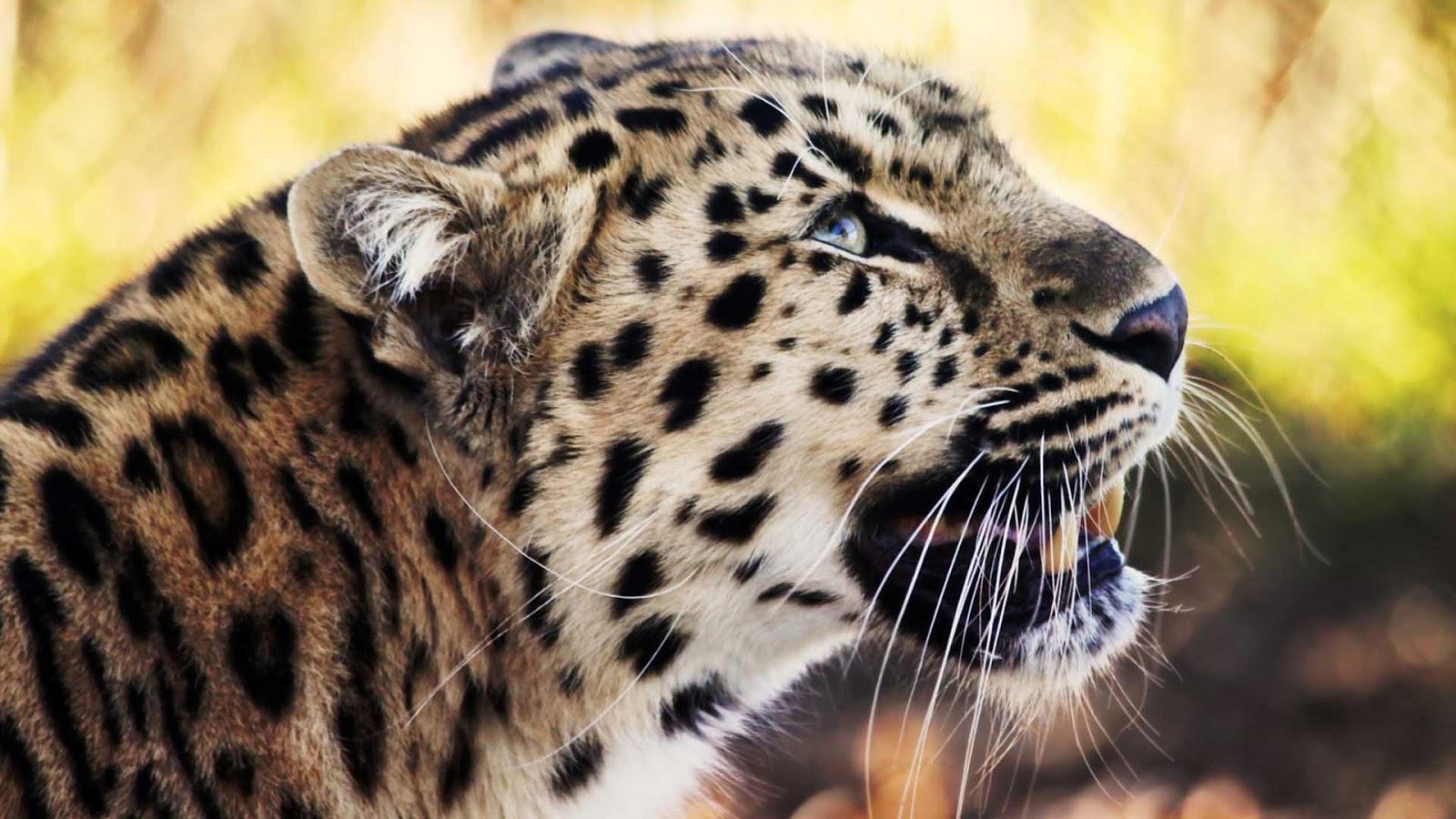 animal print wallpaper hd 1080p - photo #10