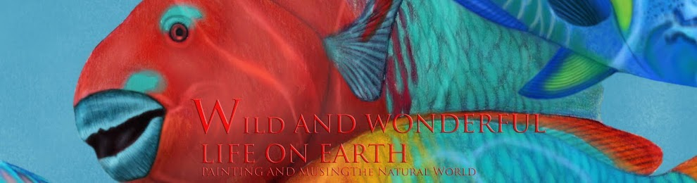 Wild and Wonderful Life on Earth
