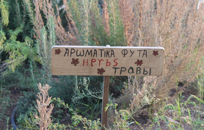 cyprus herb sign
