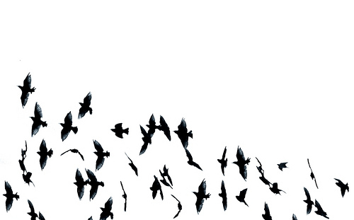 little blog of stories poem of the day april 8 black birds 500x311