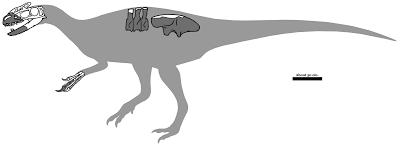 Sinotyrannus bones