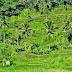 Indonesische rivieren zijn sterker vervuild dan gedacht