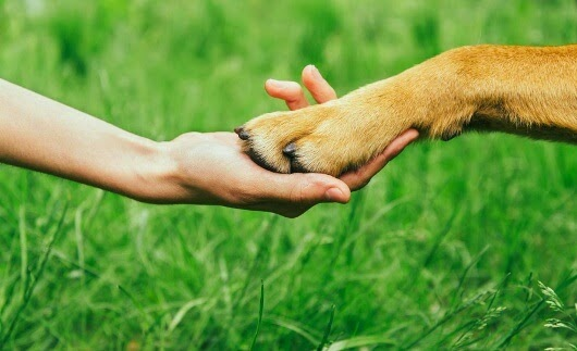 MRSA bei Haustieren