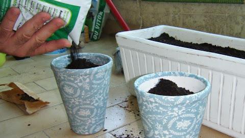 Terminar de encher a floreira com substrato universal