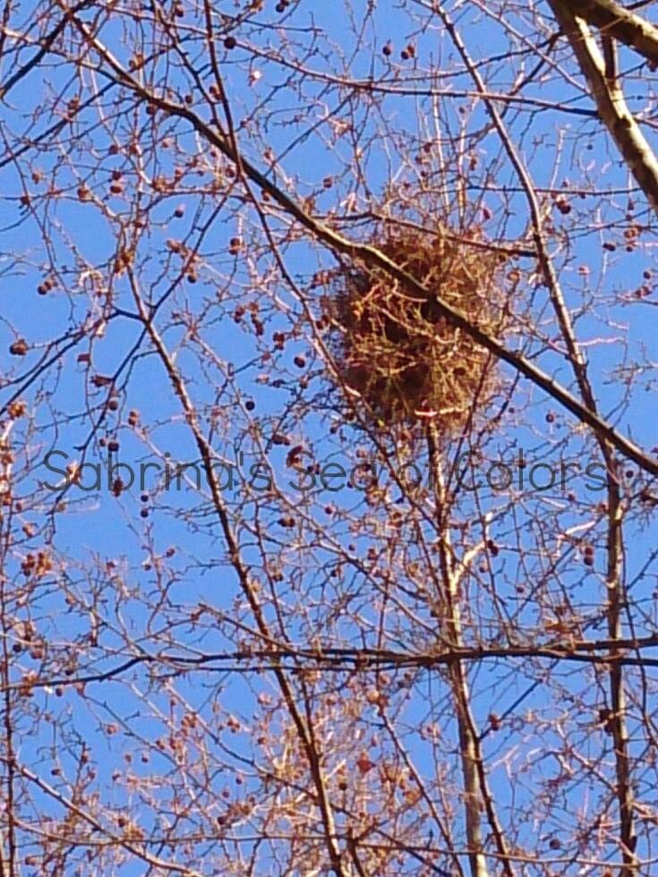 nido en árbol