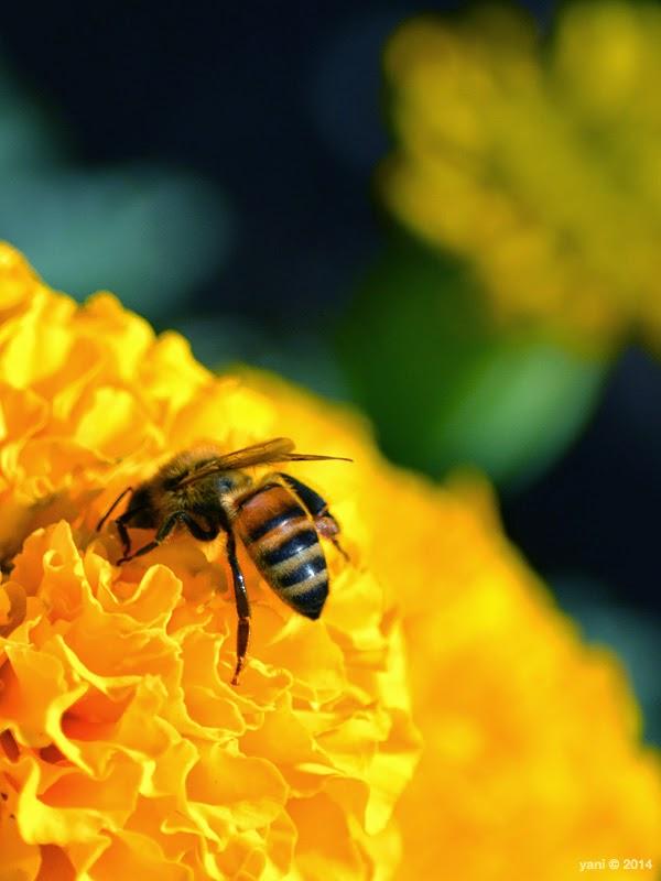 bee bootay