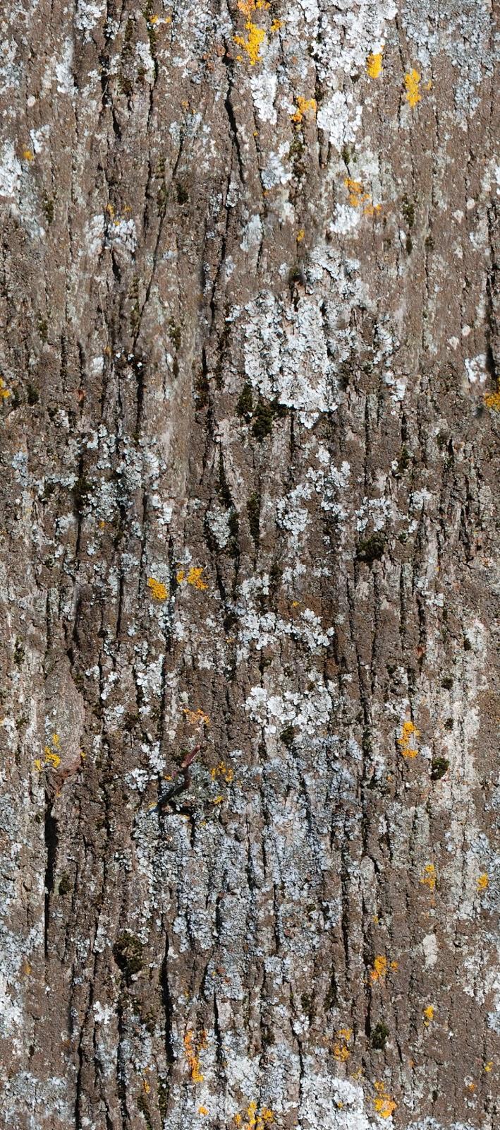 Andys northern Ontario wildflower site  flowering shrubs