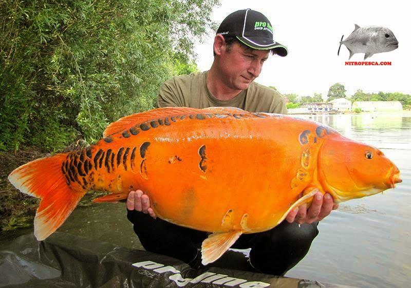 la charca del fishing tipos de carpas