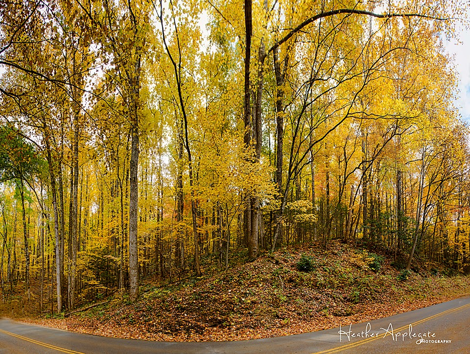 Roaring Fork Motor Trail autumn trees by Heather Applegate
