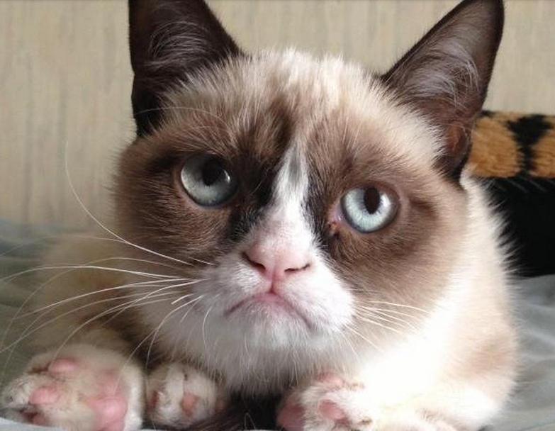 Chicas gato gato odio esta parte