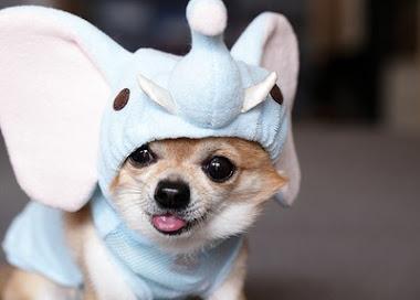 My Dog ♥.