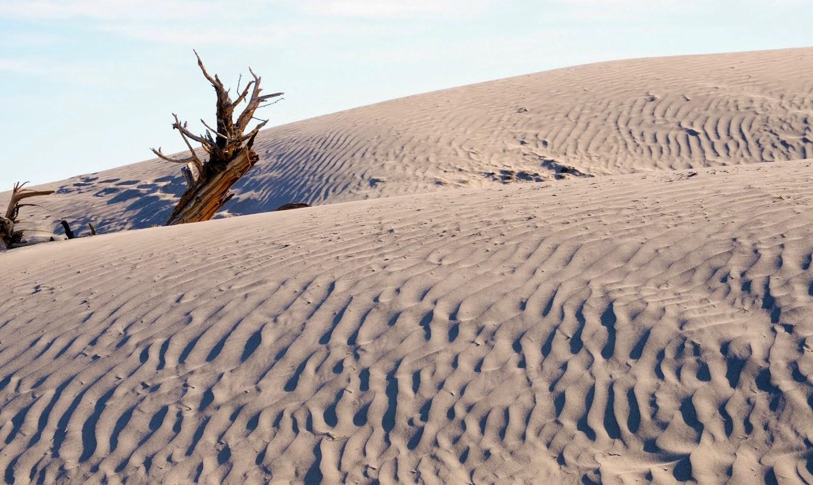 Mesquite Dunes 061