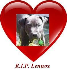 Lennox the Dog