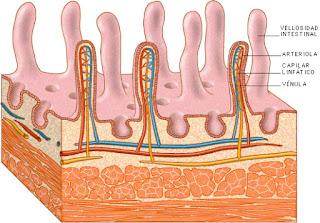 Obstrucción intestinal en el niño