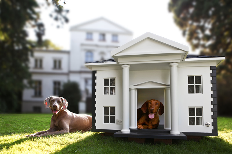 cool and creative dog mansions