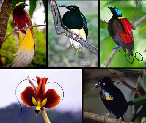Pengertian Burung, Ciri dan Klasifikasinya