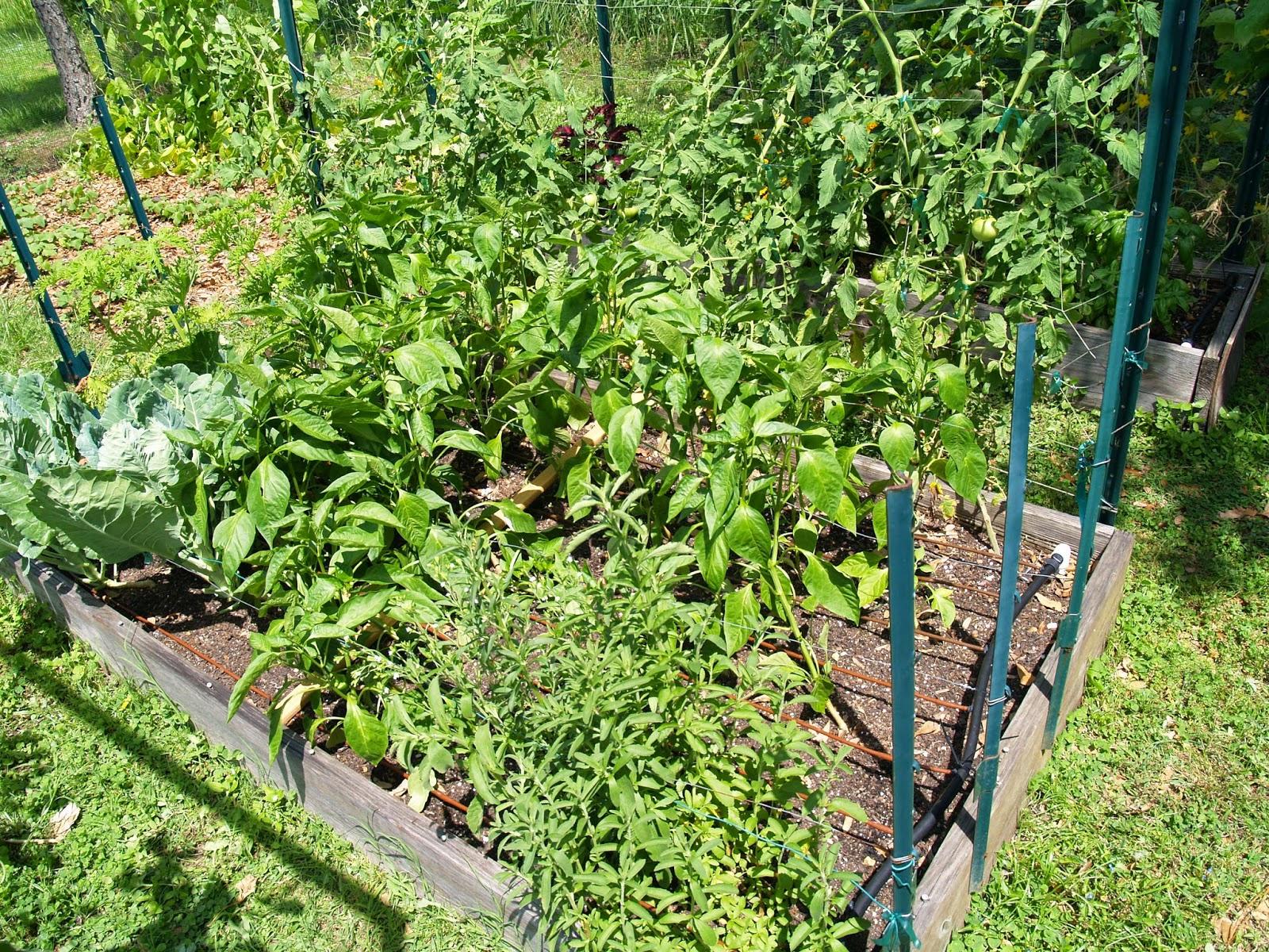 gardening in winter garden spring 2014 vegetable garden