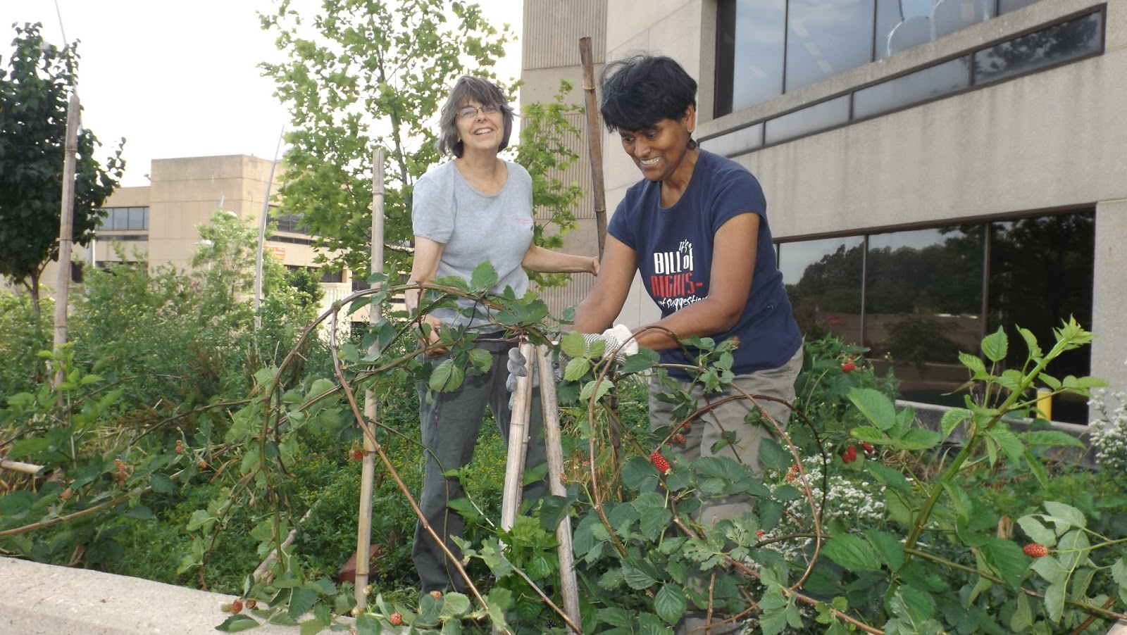 just causes volunteers help support udc u0027s sensory gardens