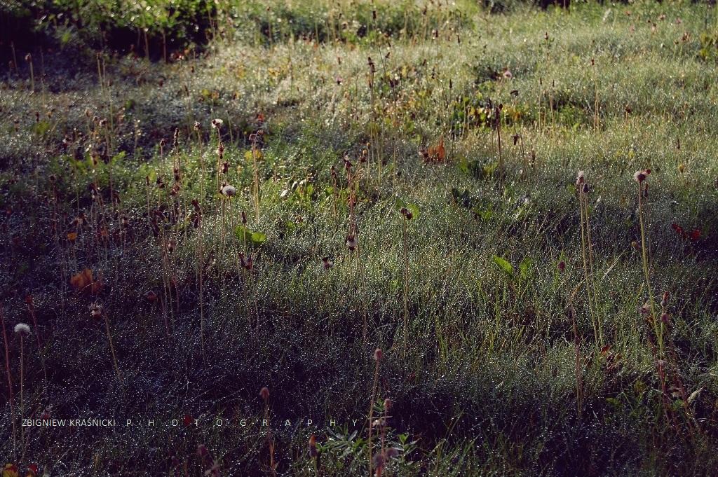 Jesienne łąki przy stoku w Rusi oraz zaproszenie na urodziny