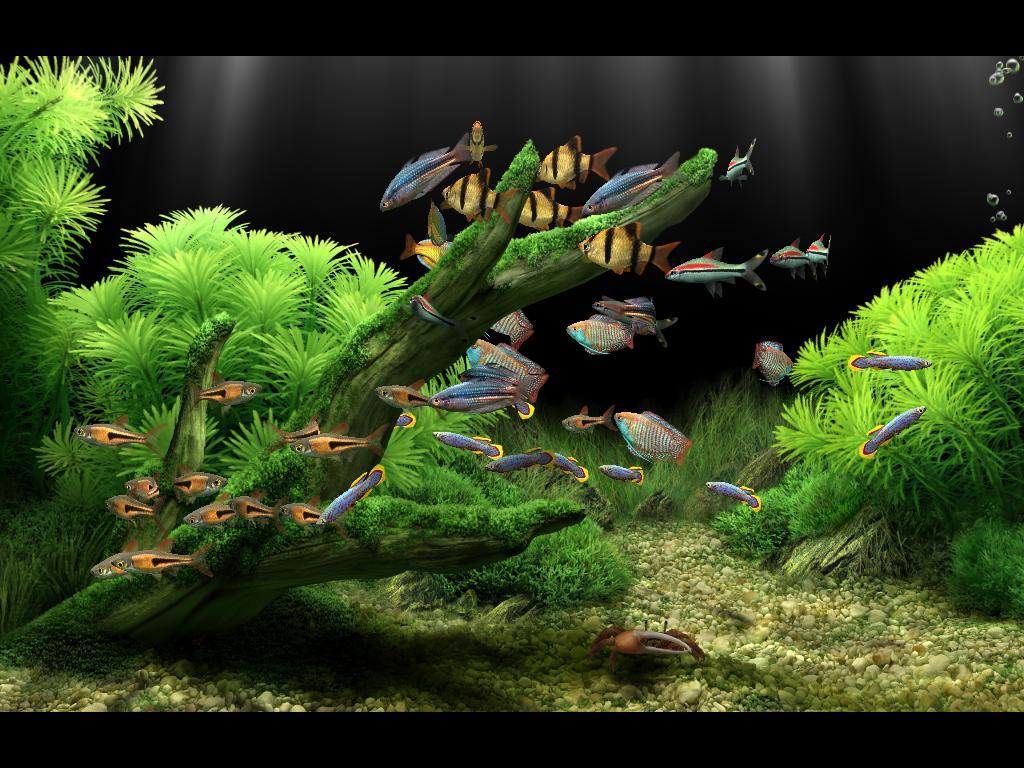 Dream Aquarium Xp Screensaver Descargar Gratis