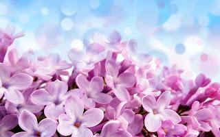 Purple Lilac Flowers Amazing Macro HD Wallpaper