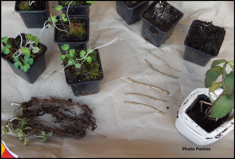 Bakker Piante : Un giardino di perenni in ticino piante da bakker