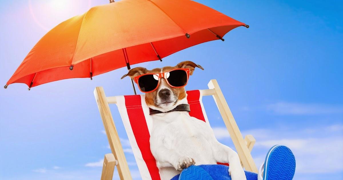 Hond zonnebril parasol strandstoel bureaublad achtergronden - Zon parasol ...