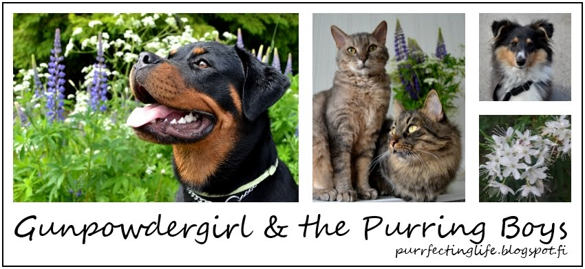Purrfecting Life - Gunpowder Girl and The Purring Boys