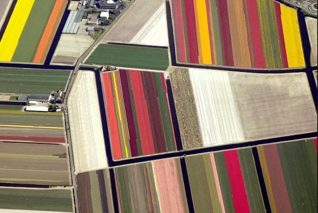 aerial photography of tulip farms in the Netherlands