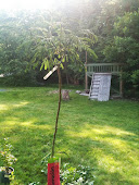 Mom's Mimosa Tree