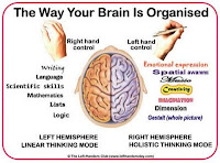 Brain Hemispheres3
