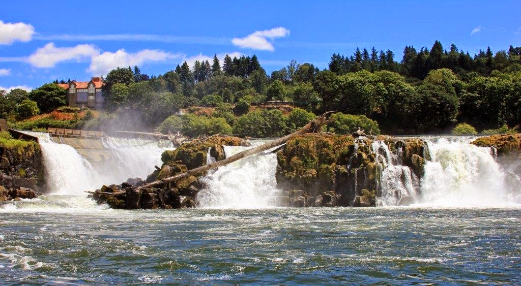 Shad fishing in oregon water time outfitters for Willamette river fishing report