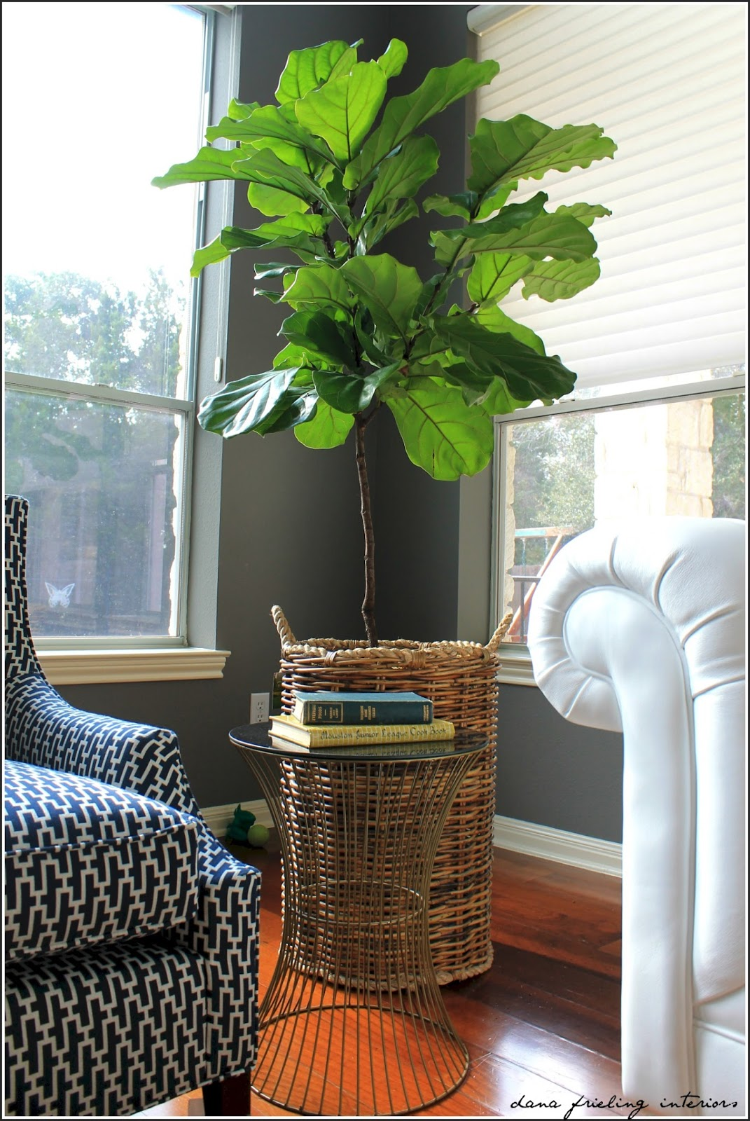 Make them wonder fiddle leaf fig love on houzz Large living room plants