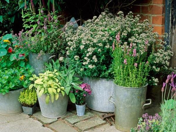 Plantar en contenedores con mucho estilo guia de jardin for Ideas para crear un jardin