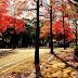 深まりゆく北九州の秋