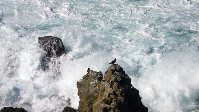 cormoranes menakoz