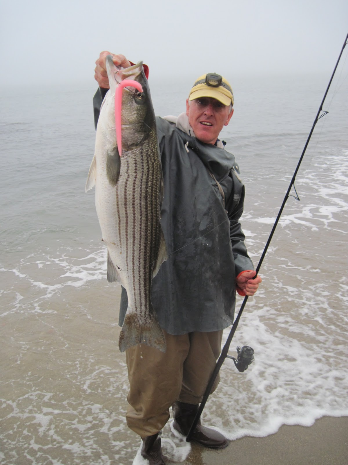Rhode island striped bass pink hogy works wonders today for Is fishing good today