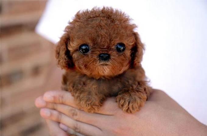 gambar anak anjing comel