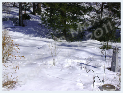 Picture of critter footprints in the snow