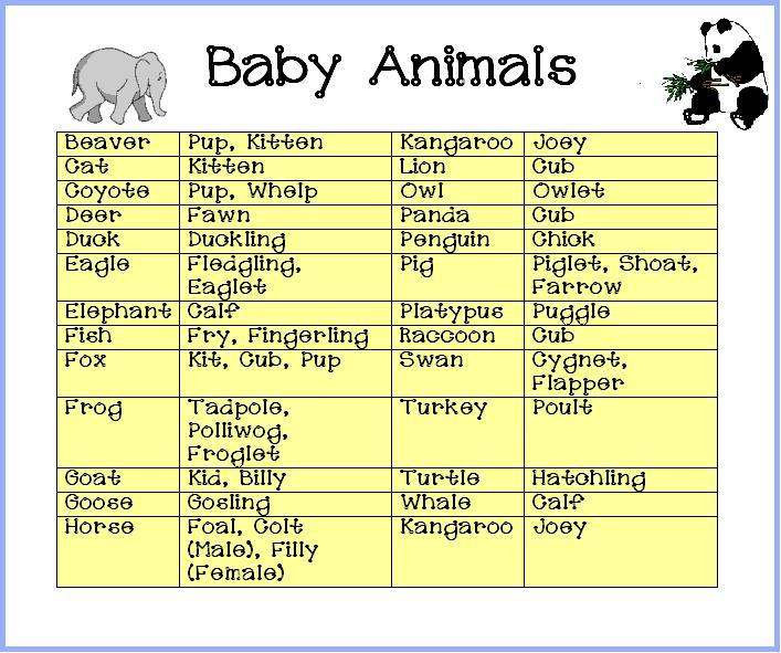 armstrong twins baby shower baby shower animal babies answers